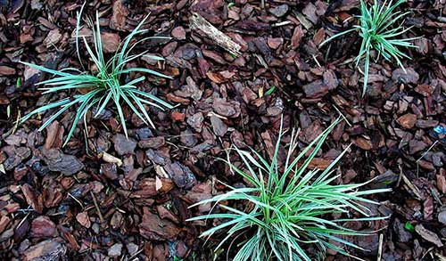 Cypress Mulch on a garden